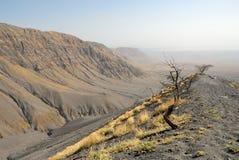 Wzgórza zakrywający powulkanicznymi popiółami, Wielki rift valley, Tanzania, Wschodni Afryka Zdjęcie Royalty Free