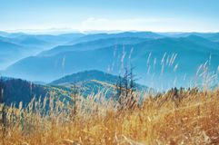 Wzgórza zakrywający w kolorze żółtym dymiący pasmo górskie suszyli trawy Zdjęcie Stock