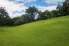 Wzgórza zielona trawa Obrazy Stock