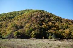 Wzgórze drzewa zdjęcie royalty free