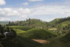 Wzgórze i Herbaciane plantacje Ella, Sri Lanka Fotografia Royalty Free