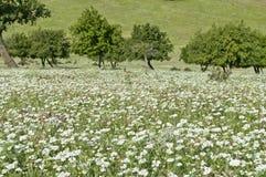 Wzgórze krajobraz Zdjęcie Royalty Free