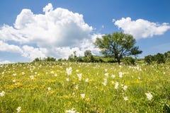 Wzgórze krajobraz Fotografia Royalty Free