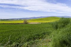Wzgórze krajobraz przy wiosną z niebem i łąką Fotografia Royalty Free