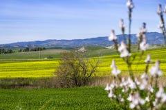 Wzgórze krajobraz przy wiosną z niebem i łąką Fotografia Stock