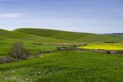 Wzgórze krajobraz przy wiosną z niebem i łąką Obraz Stock