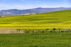 Wzgórze krajobraz przy wiosną z niebem i łąką Obrazy Royalty Free