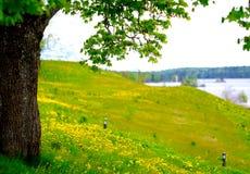Wzgórze pełno dandelions obraz stock