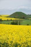 wzgórze silbury Wiltshire Obraz Royalty Free