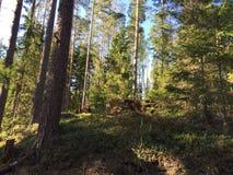 Wzgórze w lesie fotografia stock