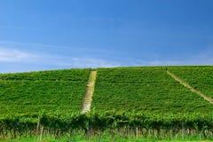 wzgórze winnica Obraz Stock