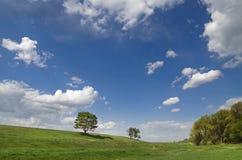 Wzgórze z drzewami Obraz Stock