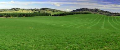 wzgórze zielona panorama Obrazy Stock