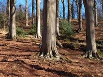 wzgórzy drzewa Zdjęcie Stock