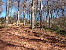 wzgórzy drzewa Zdjęcia Stock