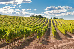 wzgórzy Spain winnica Zdjęcia Stock