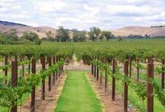 wzgórze winogrady Obrazy Stock