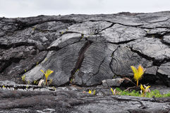 Wzmacniająca lawy skała Obraz Stock