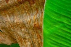 Wzorów i tekstur banana liście, kolorowa zieleń, kolor żółty i suszą Zbliżenie bananowej liść tekstury abstrakcjonistyczny tło se obrazy royalty free