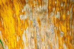 Wzorów i tekstur banana liście, kolorowa zieleń, kolor żółty i suszą Zbliżenie bananowej liść tekstury abstrakcjonistyczny tło se obraz stock