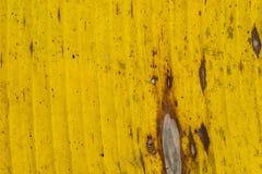Wzorów i tekstur banana liście, kolorowa zieleń, kolor żółty i suszą Zbliżenie bananowej liść tekstury abstrakcjonistyczny tło se zdjęcia royalty free