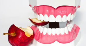wzorcowy ząb zdjęcia royalty free