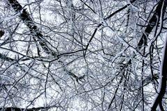 wzoru lasowy śnieg Fotografia Royalty Free