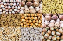 Wzoru set dokrętki przekąsza ziarna morelowego hazelnut nerkodrzewu dokrętki kokosowy źródło proteina dla energetycznej diety weg zdjęcie royalty free