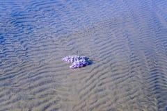 Wzory, dłubaczki w piasek diunach, pazy i wyspa, obrazy royalty free