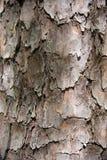 Wzory na drzewnej trwanie ciszy w parku zdjęcie royalty free