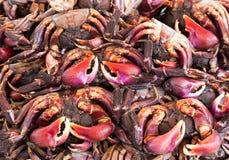 Wzory soleni kraby i kolory zdjęcia royalty free