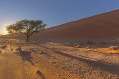 Wzory w camelthorn drzewie i piasku Zdjęcie Royalty Free