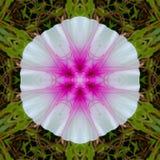 Wzorzysty biały kwiat z różowym sed obraz royalty free