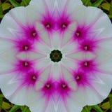 Wzorzysty biały kwiat z różowym sed zdjęcie stock