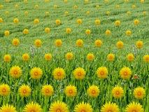 Wzorzysty Dandelions kolaż w trawy polu Zdjęcia Royalty Free