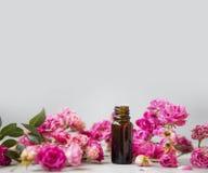 Wzrastał olej Zdrój i aromatherapy wzrastaliśmy kwiat istotną nafcianą butelkę z kopii przestrzenią zdjęcia royalty free