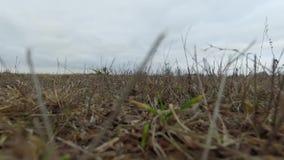 Wzrastać up od łąki
