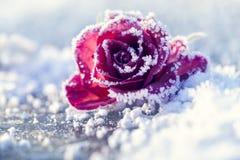 wzrastał śnieg Fotografia Royalty Free