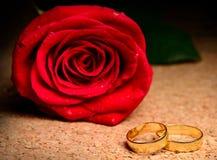 Wzrastał i pierścionki Fotografia Royalty Free