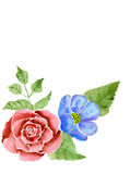 Wzrastał i róża Obrazy Royalty Free