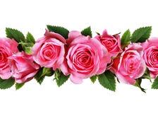 Wzrastał kwiat linię Zdjęcia Royalty Free
