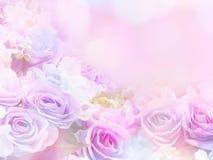 Wzrastał kwiat miękkiej części styl z rocznika filtra skutkiem Obrazy Stock