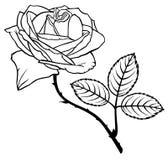Wzrastał kwiatu Obrazy Stock