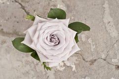 Wzrastał kwiatu nad grunge tłem Obrazy Royalty Free