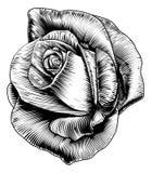 Wzrastał kwiatu w Grawerującym Ryje Woodcut stylu ilustracji