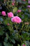 WZRASTAŁ kwiaty I rośliny obrazy royalty free