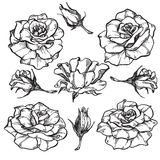 Wzrastał kwiaty ustawiających Zdjęcie Royalty Free