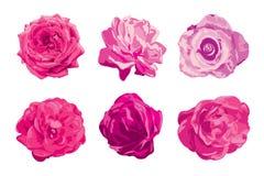 Wzrastał kwiaty ustawiających Obrazy Stock