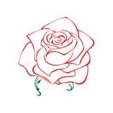 Wzrastał nakreślenie Kwiatu projekta element również zwrócić corel ilustracji wektora Elegancki kwiecisty konturu projekt Czerwon royalty ilustracja