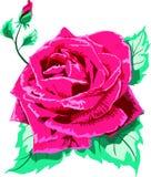 Wzrastał, róża pączek ilustracja wektor